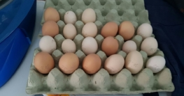 Die Huehnerhaltung bringt Ihnen viele schmackhafte Eier.