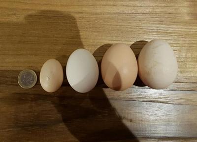 Hühnerhaltung mit unterschiedlichen Rassen führt zu vielen verschiedenen Eiern.