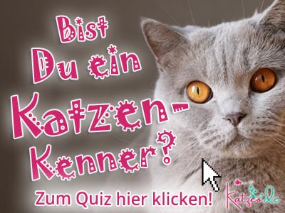 Katzen Quiz