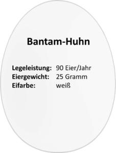 eierdetails-bantam-huhn
