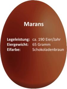 eierdetails-marans