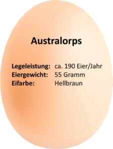 eierdetails_australorps
