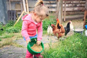 Beim richtigen Hühnerfutter ist die Fütterung kinderleicht
