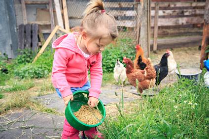 Kinder lieben Hühner, kaufen Sie einen Huehnerstall für die Haltung.