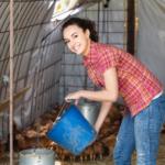 Hühnerstall kaufen und Zubehör