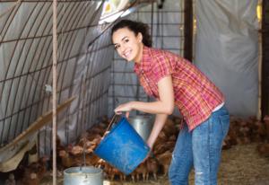 Vergleichen Sie Hühnerställe und Zubehör zur Hühnerhaltung